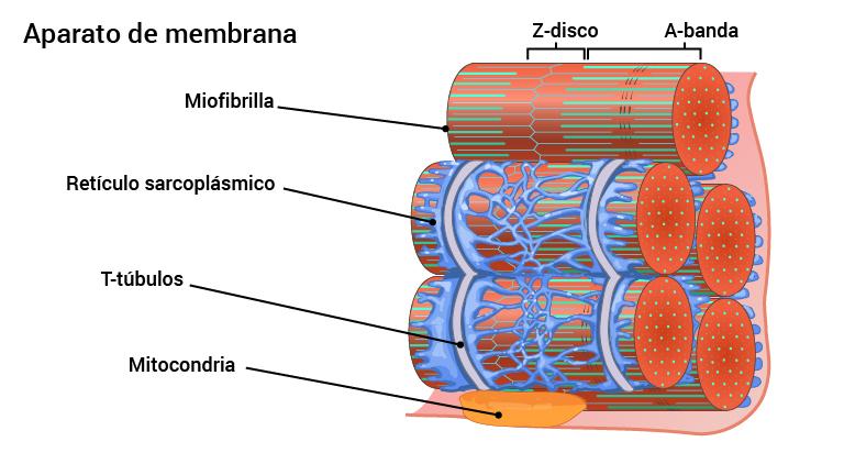 08-membranapparat_2016_spansk